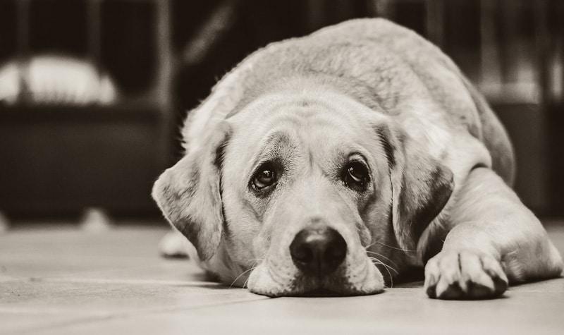 Image result for older dogs